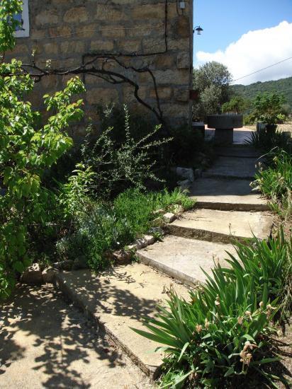 Jardin for Jardin a l americaine