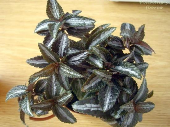 Plante d 39 appartement de l s for Arrosage plante hiver