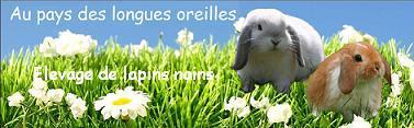Au pays des longues oreilles, élevage de lapins nains béliers angora