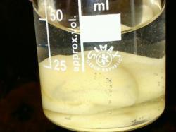 Réaction enzymatique avec du miel naturel