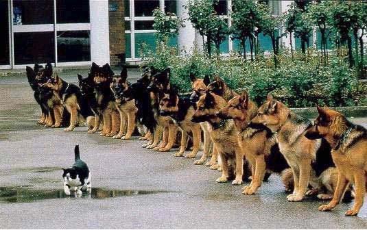 Exposition de minoux meow meow Humour-insolite