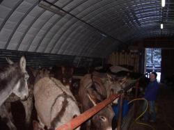 Des ânes à Venosc