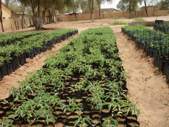 plantations GMV