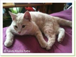 Caramel, chaton à adopter Paris