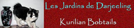 Les jardins de darjeeling, chatterie d'élevage de Kurilian bobtail