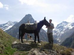 Un âne à Venosc
