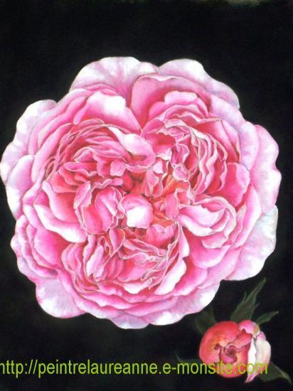 dessin au pastel de fleur rose