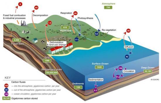 Sources et puits de carbone (©CO2CRC)