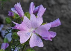 la naturopathie par les fleurs