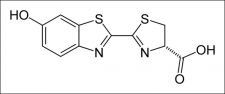 Représenation topologique d'une luciférine