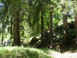 la forêt au Nord de la maison