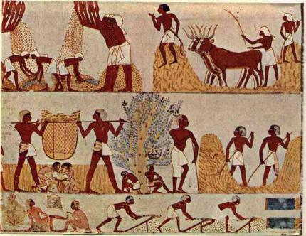Peinture de la récolte du blé