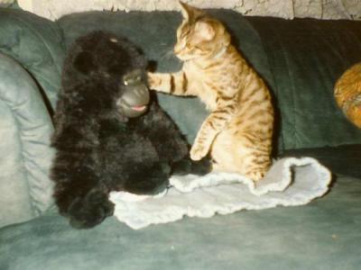 Gribouille et King-Kong