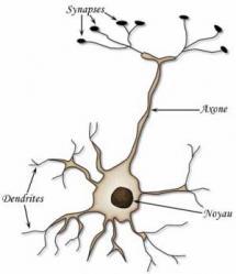 représentation d'un neurone
