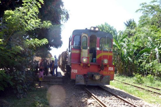 Train dans la brousse