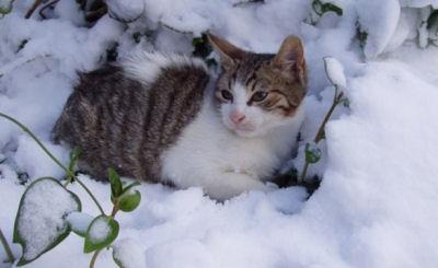 Le chat à l'abandon