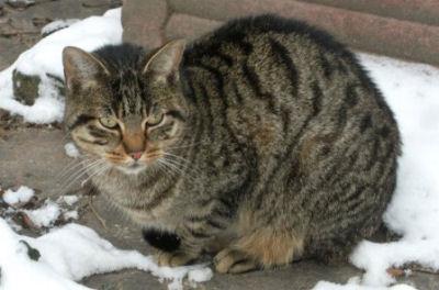 Etre un chat abandonné