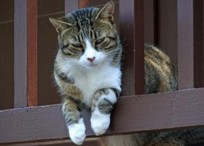 Le chat sur le balcon