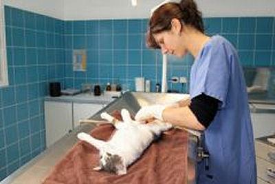 Visite du chat chez le vétérinaire