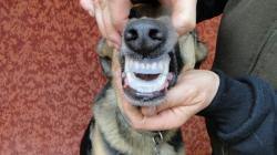 Pas de gène pour le chien, il pourra manger mais sur le côté, si besoin en était.