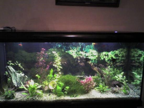 2 vente d 39 aquariums