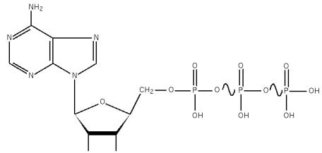 molécule d'ATP