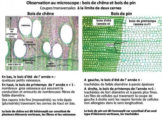 observation-au-microscope-coupes.jpg