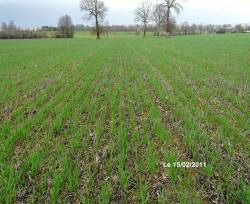 semis direct blé