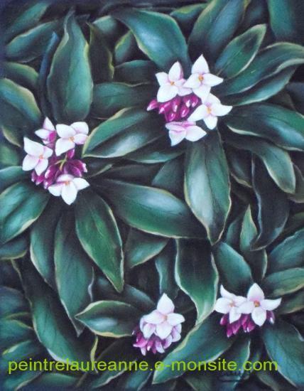 daphnée dessin au pastel de fleur