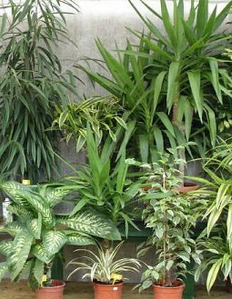 plantes intelligente
