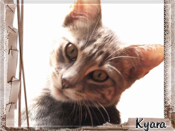 Ma puce kyara une adorable minette - Mes chats ont des puces ...