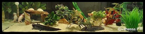 nettoyer rochers d aquarium