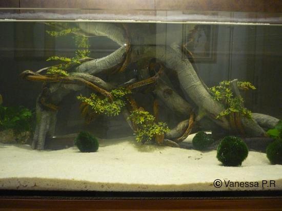 décoration aquarium pour axolotl