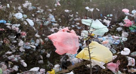 Abre plastique...