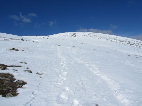 Petit Canaillou loin dans la neige