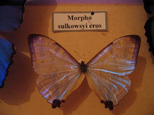 Morpho Photo Coll A.-M. BEA Propriété Exclusive du Moulin de Prey Mars 2011