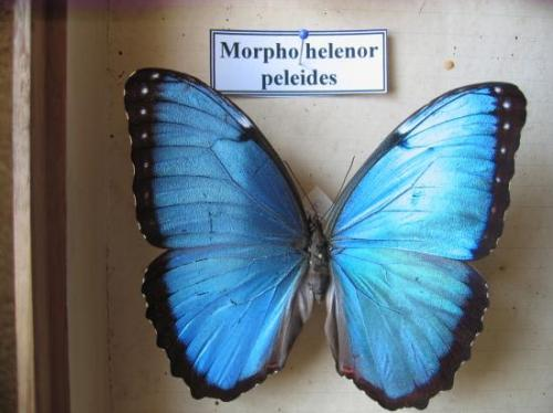 Morpho Photo et Coll. A.-M. Bea Mars 2011