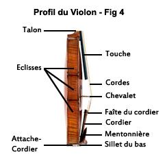 Profil du violon, talon, eclisses, touche, cordes, chevalet, faîte du cordier, cordier, mentonnière, sillet du bas, eclisses, attache-cordier