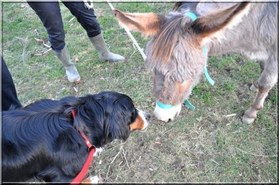 rencontre entre 2 chiens